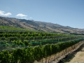 Spectacular Vineyard